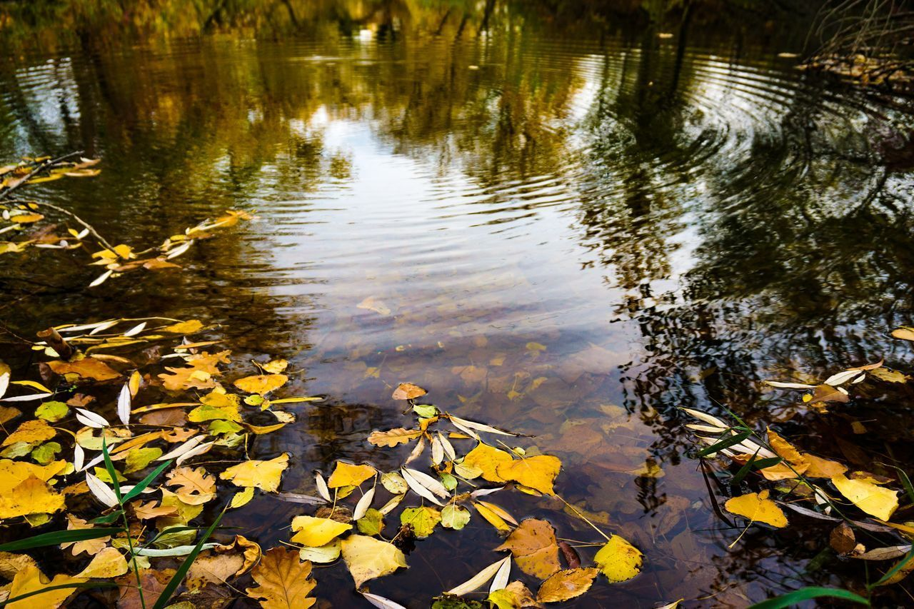 HIGH ANGLE VIEW OF LEAVES FLOATING IN LAKE