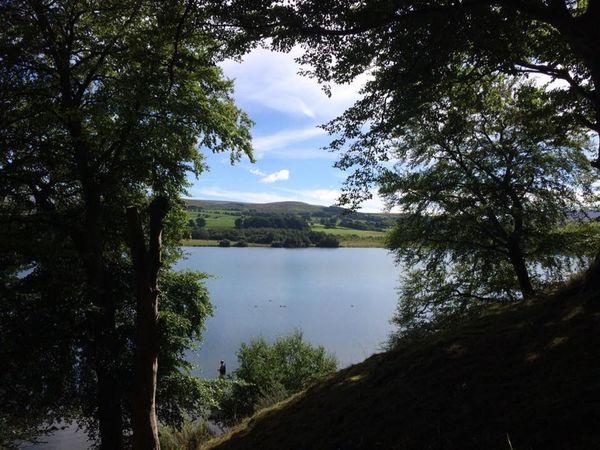 EyeEmNewHere Brampton Tree Water Nature Scenics Lake Beauty In Nature Tranquil Scene Outdoors EyeEmNewHere