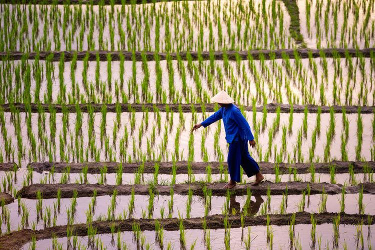 Farmer is walking on the field. farmers farming on rice terraces. ban pa bong piang.