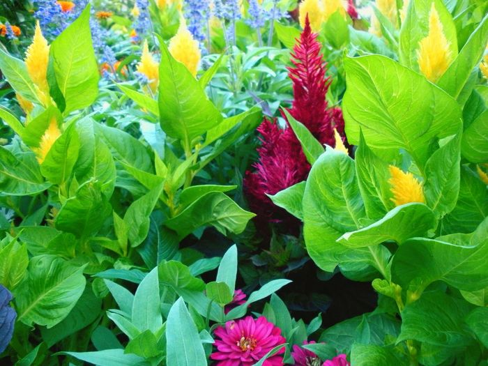 Flowers Floral Plants Outdoors Shadows Color Scent Green UW Madison Colour Of Life