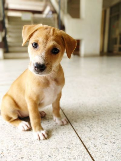 Portrait of puppy sitting on floor at home