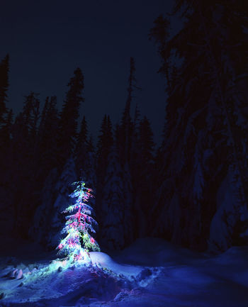 Beauty In Nature Christmas Lights Christmas Tree Cold Temperature Illuminated Illumination Magical Magical Forest Nature Night Night Sky No People Outdoors Scenics Snow Snowy Forest Tranquil Scene Tranquility Tree Winter The Great Outdoors - 2017 EyeEm Awards