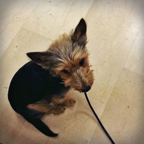 Cane Dog Hund