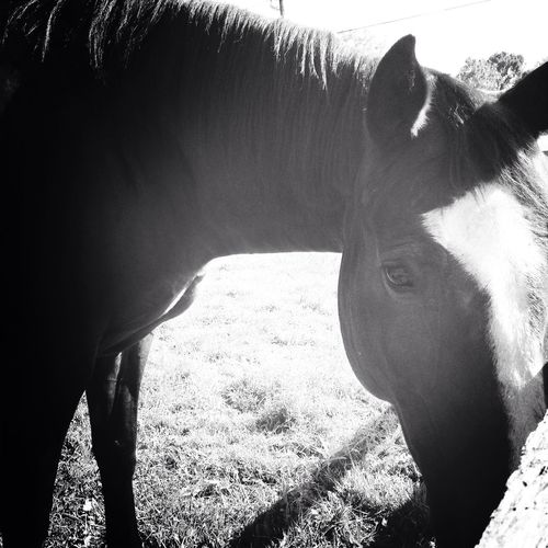 Horses Good