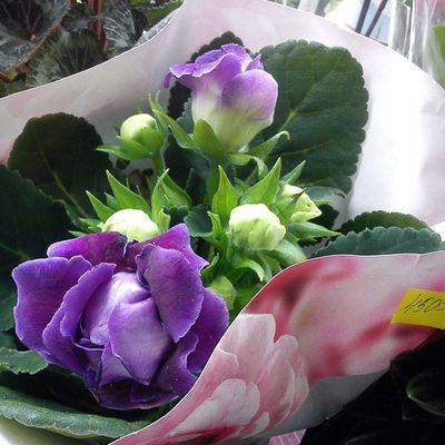 #beautiful #floweroftheday #summer #plants #flower #love #petals #blooms #insta_pick_blossom #flowers #flowerstagram #flowerstyles_gf #flowerporn #florals #appitme #flowerslovers #bloom #petal #botanical #floral #blossom #botanical #sopretty #instablooms Flowerporn Botanical Summer Blooms Flowers Floweroftheday Nature Flowerstyles_gf Flower Insta_pick_blossom Beautiful Flowerstagram Love Instablooms Spring Flowersofinstagram Petals Florals Pretty Flowermagic Plants Sopretty Bloom Flowerslovers Blossom цветы Floral Appitme Petal