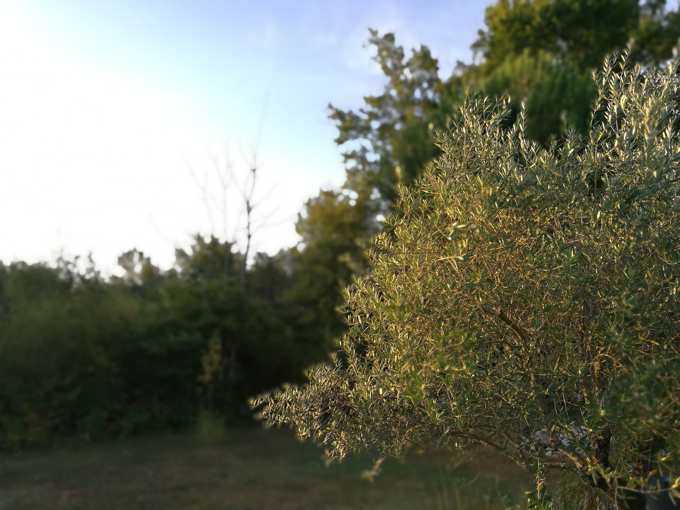 plant, close-up, growth, focus on foreground, nature, beauty in nature, scenics, green color, day, sky, tranquility, botany, fragility, freshness, tranquil scene, branch, outdoors, non-urban scene, no people, growing