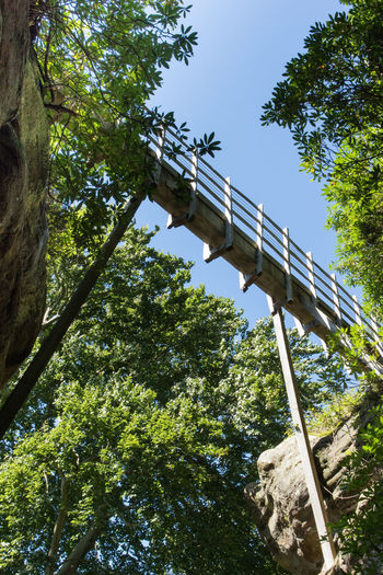 Thin Bridge // Tree Low Angle View Bridge - Man Made Structure Outdoors Day No People Branch Sky Nature Built Structure Hawkstoneparkfollies Forest Landscape Foot Bridge Beauty In Nature Tree Area Shropshire National Park Travel Destinations Hawkstone Vacations EyeEm Best Edits Tranquility EyeEm Gallery History