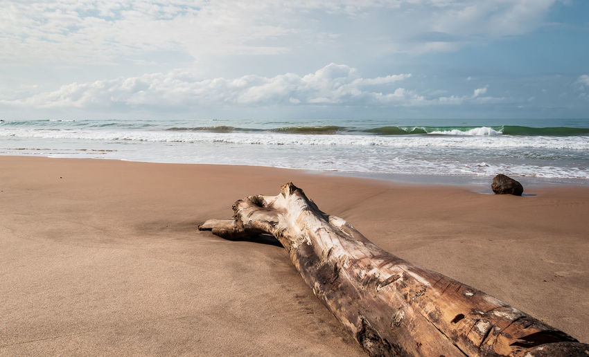 Africa beach with a tree and without the marks of tourists located in axim ghana west africa.