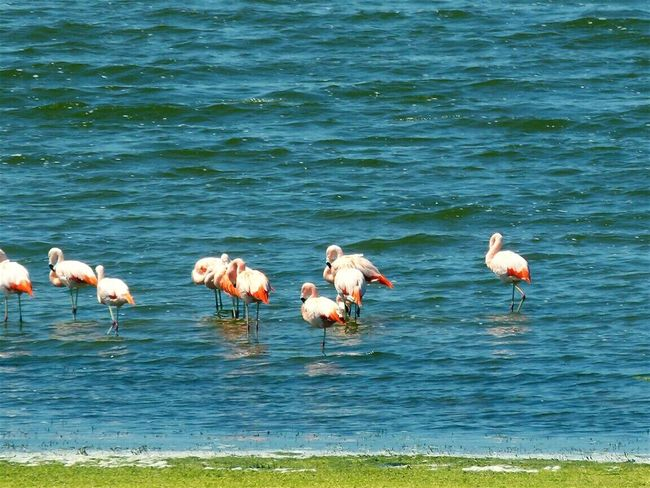Flamingo Animals In The Wild Animal Wildlife Water Nature Bird No People Outdoors Day Lake Colony Beauty In Nature Animal Themes