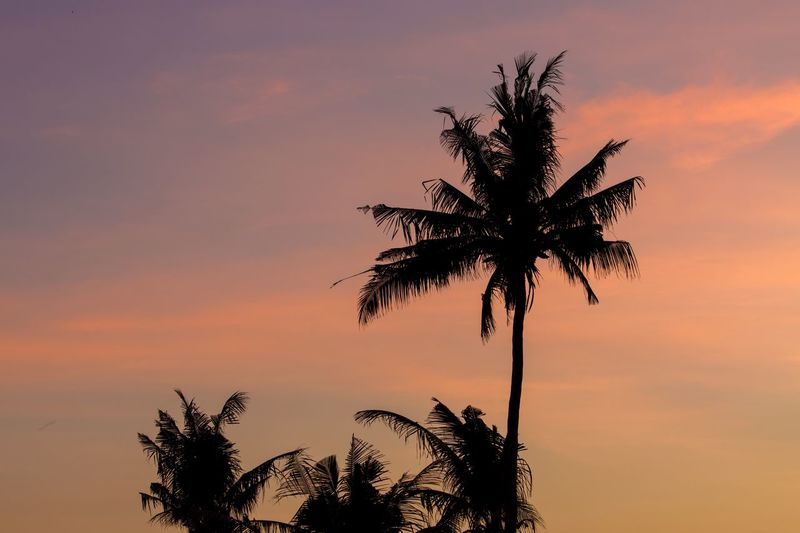 Sunrise palms. Sunrise Palm Tree Tree Sky Nature Scenics Growth No People Tranquility Beauty In Nature Silhouette Outdoors Beach Bali, Indonesia Travel Destinations Honeymoon