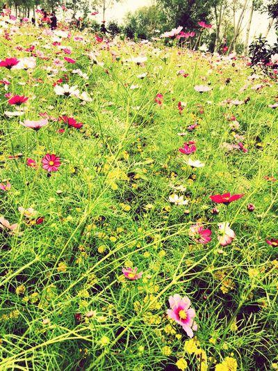 Flwoers 花 Happy Beautiful World Nice Day