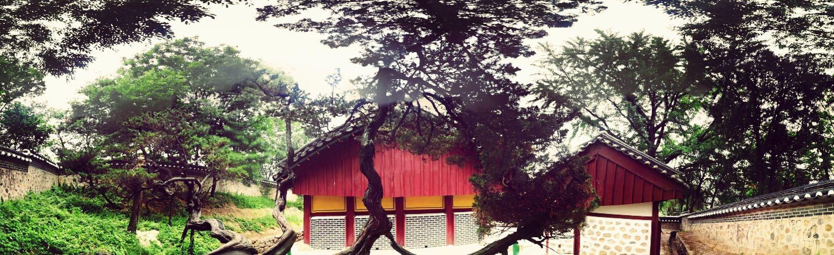 Amezing Tree~~ 구부러진 나무가 매력적인 전통 학교 Nature 건축의 미