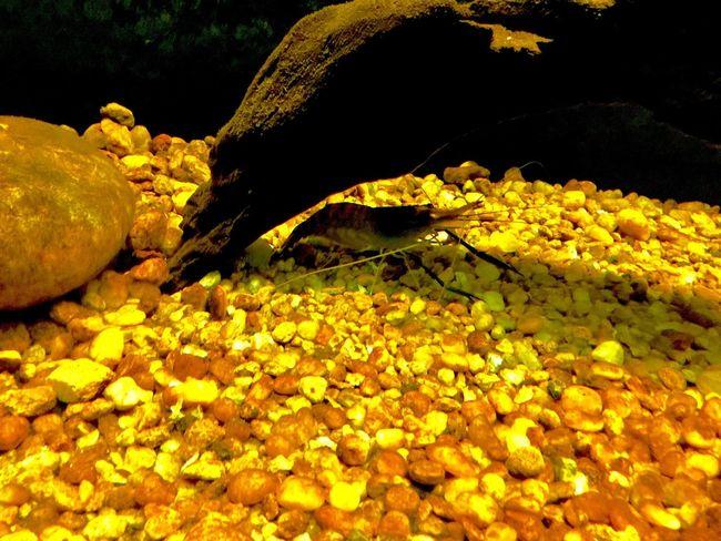 Aqua Park Prawn Scampi Shrimps Prawns Prawnography Sea Life School Of Fish Aqua Zoo Aqua Aquarium Aqua Life Fish Photography Water EyeEmNewHere