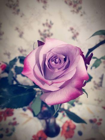 Flower Petal Rose - Flower Fragility Beauty In Nature Flower Head Nature Pink Color No People Rose Petals