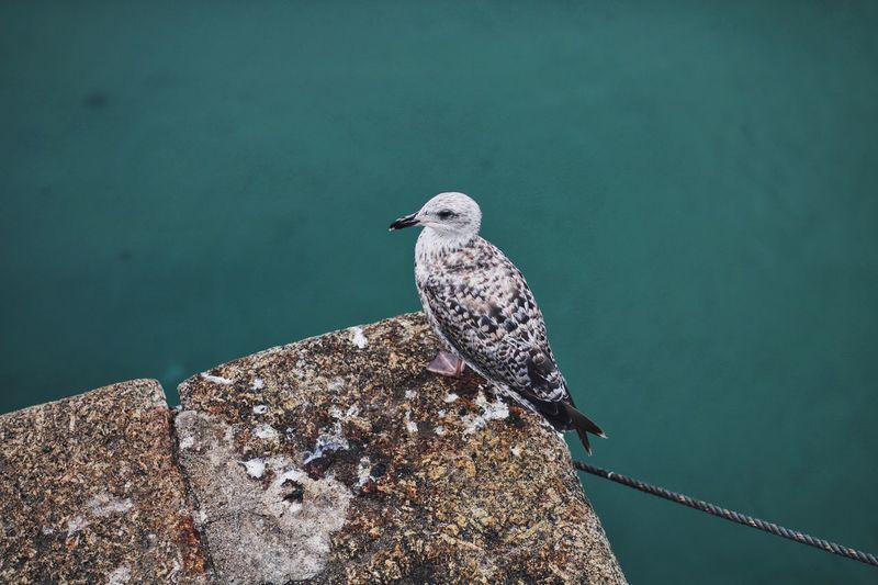 High angle view of seagull perching on concrete by sea