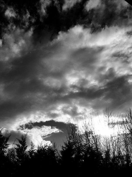 saturday Blackandwhite Monochrome Streetphotography Tree Sky Cloud - Sky Low Angle View Nature Silhouette Scenics Outdoors No People Tranquility Treetop Beauty In Nature Day Storm Cloud