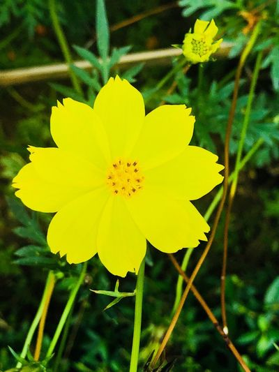 Flower Flowering Plant Plant Fragility Inflorescence Vulnerability  Yellow Flower Head Freshness Growth Close-up Pollen Nature Focus On Foreground Beauty In Nature No People