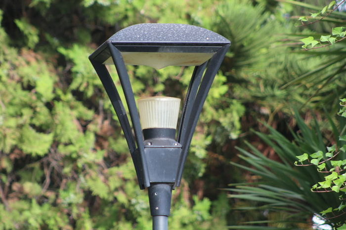 No People Focus On Foreground Plant Day Nature Outdoors Close-up Tree Freshness Lamp Lamp Light Lamps And Lights. Lampions Lampost Travel Destinations Travel Lamp Lights In Decorations Lamplight Lamp Post Lamp Lovers Of The World Unite