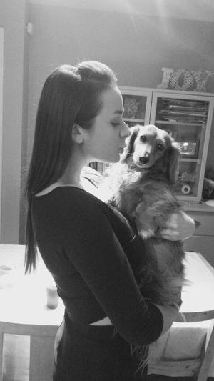 Dog Sausage Dog Cute Love Kisses ♥