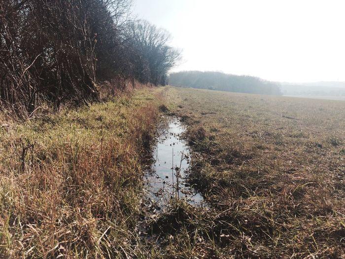 Stream on grassy field