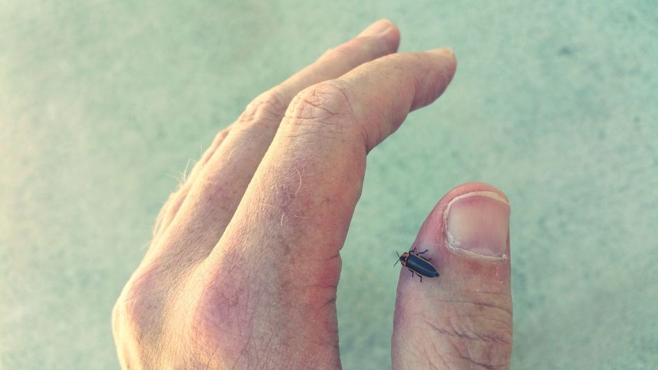 EyeEm Selects Human Body Part Human Hand Human Finger Close-up Adult Day Nature Insect Collection Insect Photo Fireflies ♡ Fireflies Lightning Bug Lightning Bugs Summer Summertime Bugs And Insects Bugs Are Beautiful Insects