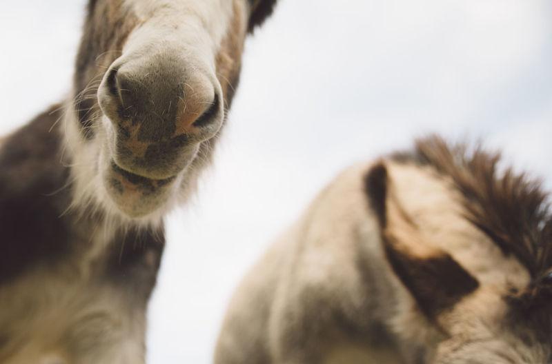 Close-Up Of Donkeys Against Sky