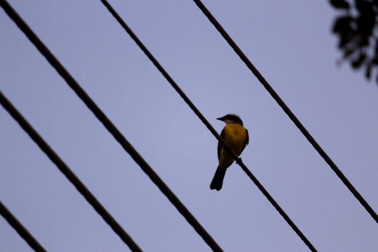 #urbanana: The Urban Playground Bird Perching Photograph Close-up Sky Songbird