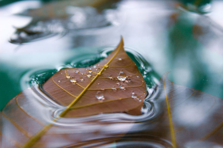 High angle view of leaves in glass on table
