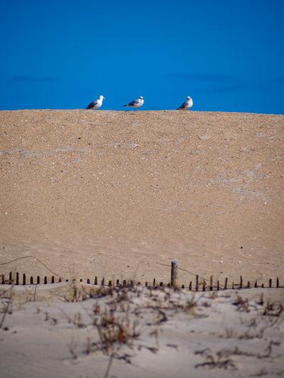 Seagull perching on beach against blue sky