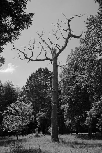 Death In The Midst Of Life Tree Plant Nature Sky Growth Day No People Outdoors Tranquility Branch Tree Trunk Trunk Tranquil Scene Beauty In Nature Grass Non-urban Scene Death Blackandwhite Black And White