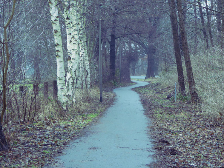 Love That Path😍 Beauty In My Every Day Life Cold Outside,time For Creativity😎 For My Friends 😍😘🎁 Tranquility Enjoying The Veiw  Nature Enjoy The Little Things Lovemyhometown Bicycle Path Cloudy Sky-nice View Brrrrrrrrr❄❄❄❄ Cold Outside ❄⛄  Beauty In Winter😍 Express Yourself ❤ Artistic Expression Cloudyweather