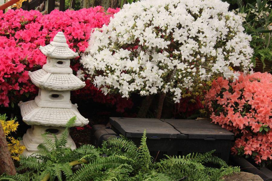 Austria Austria ❤ Blossom Exhabination Exhabition Flower Flowers Japan Garden Klosterneuburg Nature Orchid Orchid Blossoms Orchid Flower Orchidea Orchidee Orchideen Orchideen Austellung Orchideen Blau Outdoor