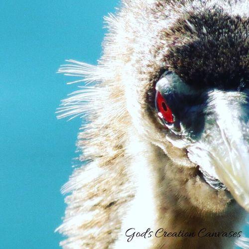 Check This Out Strangebird LakeEola Taking Photos Enjoying Life