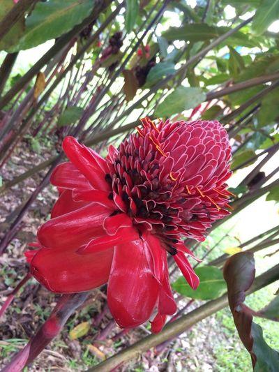 Wonderful Tropical Flowers of Bolivia Nature