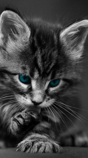 Domestic Cat Domestic Animals Animal Themes Pets One Animal Close-up Mammal Feline No People Portrait Looking At Camera Whisker Animal Eye Day Indoors  Sky First Eyeem Photo Model Cat Cats Of EyeEm Tranquility Cityscape Turkeyphotooftheday Cats Young Adult