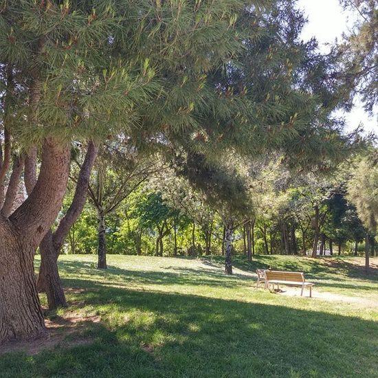 Hospitaletdellobregat Parque  Park Puisto Bench Banco Relax Nature