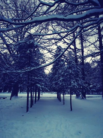 winter comes around Shades Of Winter #winterready Sky Bare Tree Landscape Branch No People Tranquil Scene Day Outdoors Scenics Tranquility Weather Beauty In Nature Nature Tree Cold Temperature Winter Snow EyeEmNewHere