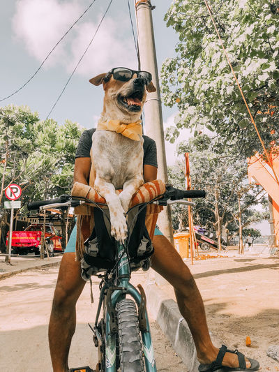 Cruising around One Animal Mammal Pets Domestic Animals Animal Themes Dog Domestic Canine Mode Of Transportation Transportation Animal Vertebrate Land Vehicle Tree Bicycle Plant Day Front View Nature Real People Outdoors Cruising Around Riding Bycicle Funny People FUNNY ANIMALS Funny Dog
