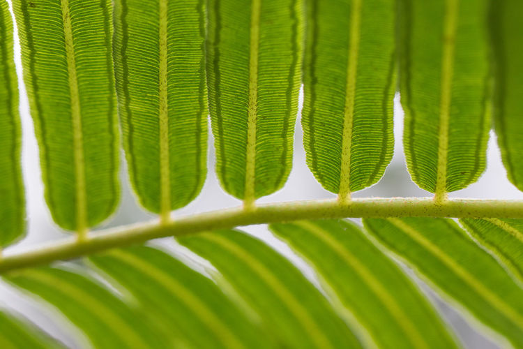 Leaf Palm Leaf Plant Part Palm Tree Green Color Tropical Climate Frond Plant Nature Close-up Growth Tree Day Freshness Beauty In Nature No People Outdoors Environment Fern Backgrounds Rainforest Leaves Tropical Tree