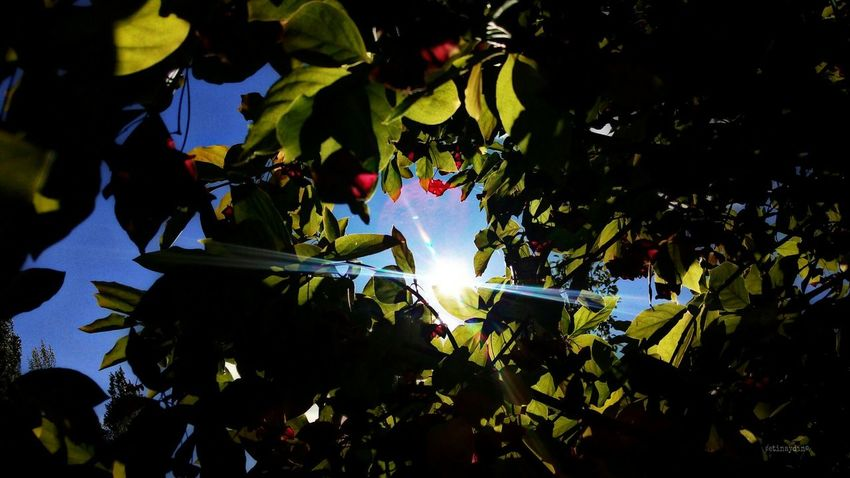 Munzurnationalpark Dersim Turkey Red&green Green Sunset Red Munzur Nature Ovacık