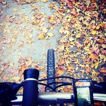 Fall Bike Bike2work Biking Day Real People Sunlight Architecture High Angle View Shadow Outdoors Built Structure Nature Body Part City Wall Shoe Pattern Low Section Focus On Shadow Wall - Building Feature Street