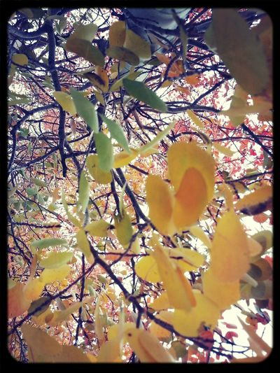 Kross Filter Autumn Leaves TreePorn