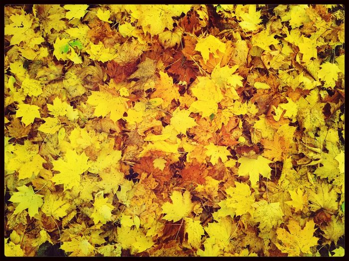 Unicolor Autumn Alltheleavesareyellow