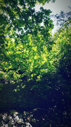 Dream Green Sunshine Trees Relax Life In Colors Light And Shadow
