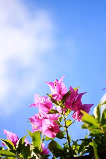 Enjoying Life Flower