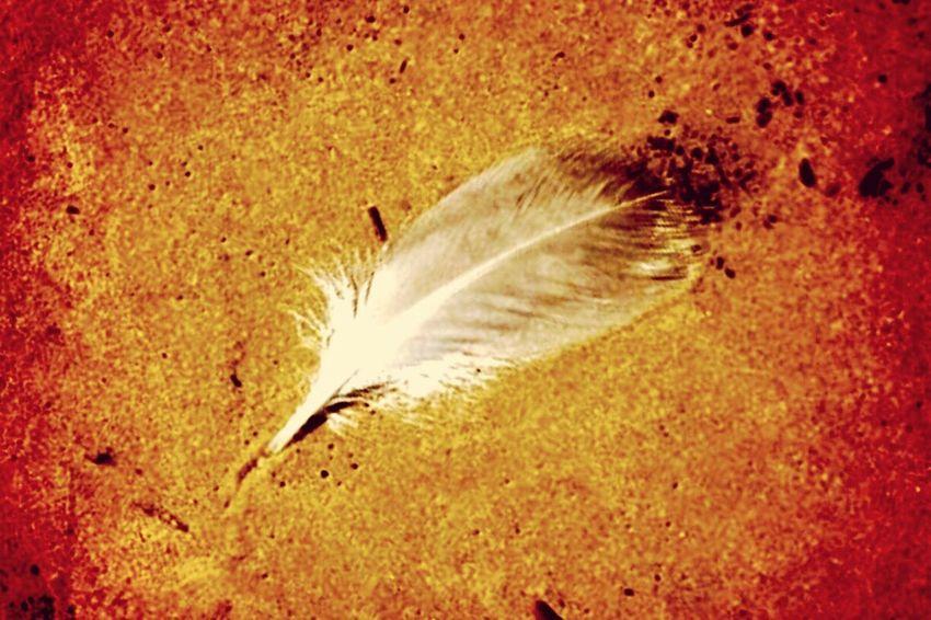 Feather on Quintana Beach Feather  Sand Beach Quill Quintana Writing On The Sand