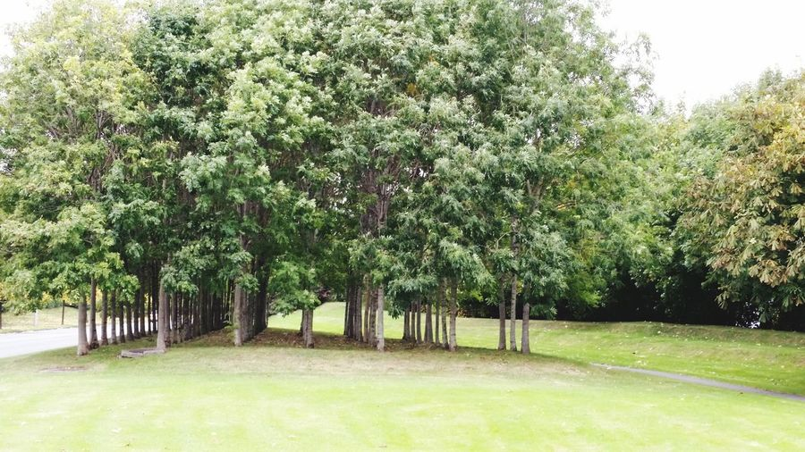 Trees Beauty In Nature Green Color Outdoors Nature Grass Growth Park - Man Made Space