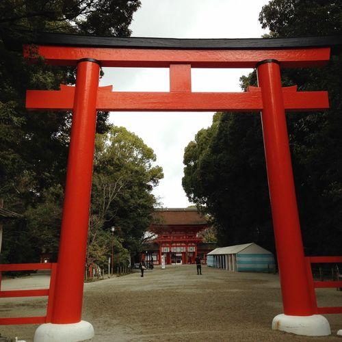 Shimogamo Shrine Tree Architecture Built Structure Plant Red Spirituality Shrine Nature Place Of Worship