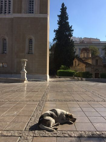 Architecture Building Exterior Dog One Animal Outdoors Shadow Sunlight Tree