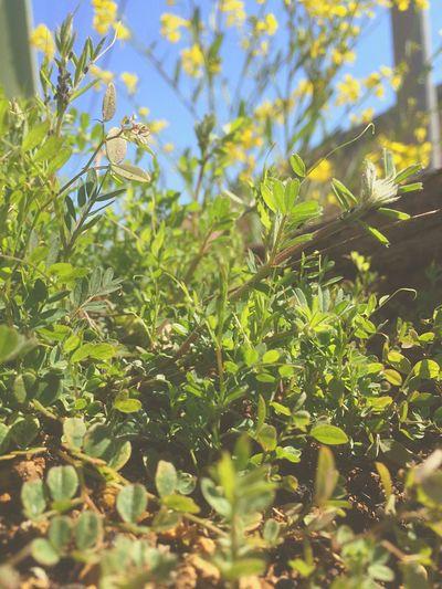 Good Times Art Life Enjoying Life Time Hello World Stopping Time One Love Tuning Life's Journey  縁 Everyday Joy Bestfriend 菜花 Enjoying The Sun Green Family Wood 秘密基地の前に置いてあるヒノキの丸太。良い感じに朽ちてきて、山から借りて来た土を入れ小粋な花でもって思ってたけどもね、今日の朝山行ったら土を借りた場所がこんな感じで全く同じノリだったから、小粋な花プロジェクトは、中止。山の土は命が一杯でスゲー。また今度土を返しに行く時違う場所のを借りて来ようと思う。何が出てくっかわかんねーのが魅力的過ぎるww